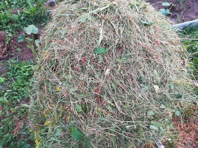 Чем мульчировать кабачки в открытом грунте