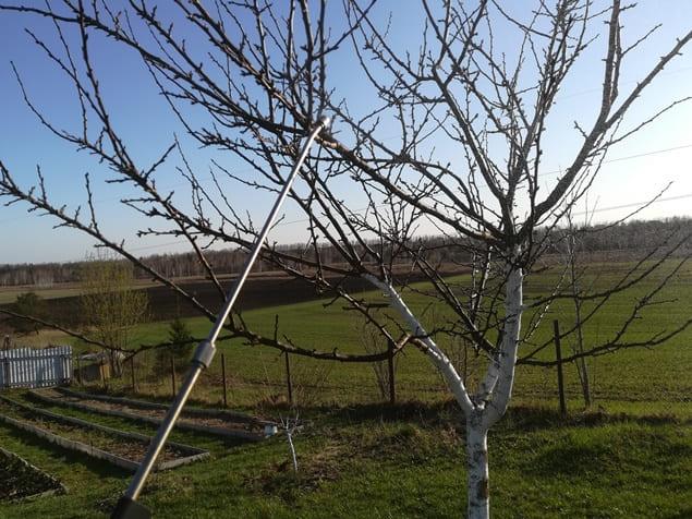 Фитоспорин для деревьев